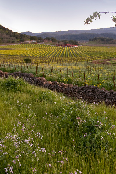 Napa Valley Spring 2008