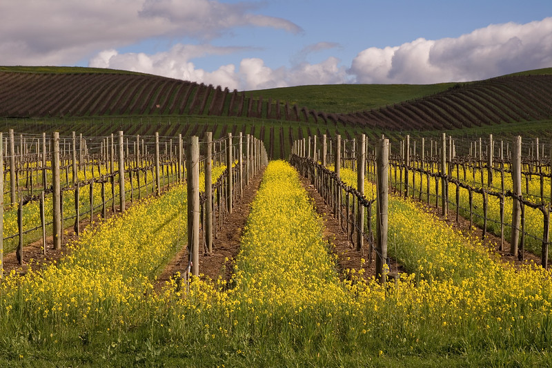 Carneros District<br /> Napa CA