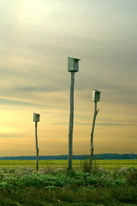 Birdhouses on the marsh