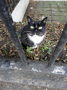 Irish kitten--behind bars!