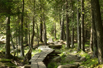 Jordan Pond Path, Acadia National Park, Maine