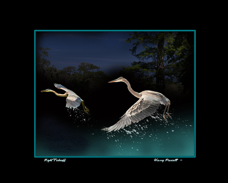 herons taking off at night