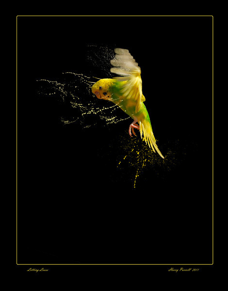 """Gulf Breeze Zoo, parakeet """"loosing it"""""""