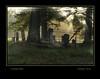 sunlight on the graves
