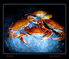"light painting  ""Crabs on Ice"""