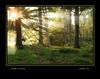 sunbeams in the grove