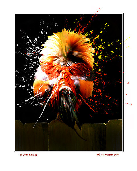with a hour of Photoshop a ruffled rooster gets a bit of jazz