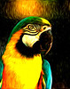 the drama bird