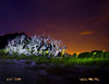 Ft Pickens at night, light painted tree