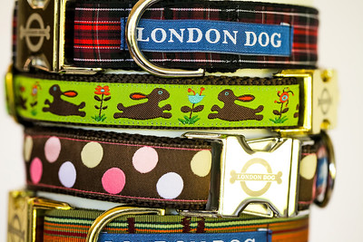 London Dog-15