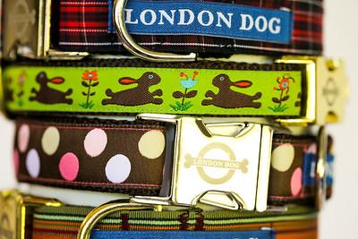 London Dog-16