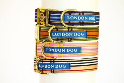 London Dog-13