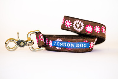London Dog-19