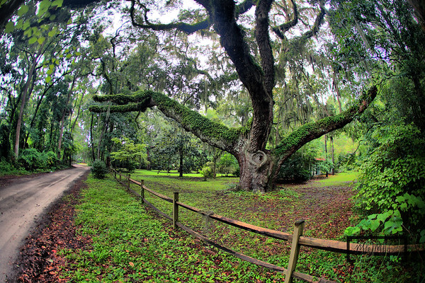 Secession Oak, Birthplace of Civil War