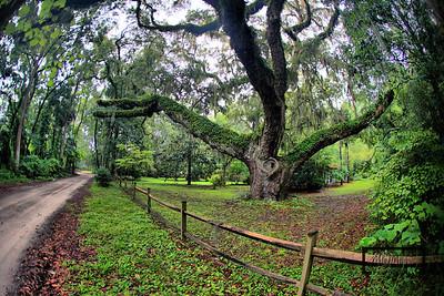 Secession Oak, Birthplace of Civil War