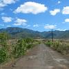 The road to Mt Ka`ala, Sept 3, 2003