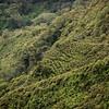 Interesting cultivation down towards Kahili Mountain Park