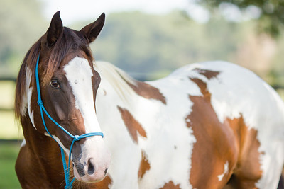 20130914_Horses_006