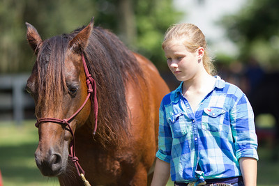 20130914_Horses_005