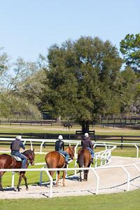 20140215_horses_022