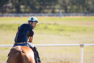 20140215_horses_004