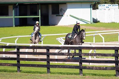 20140215_horses_013