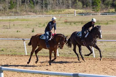 20140215_horses_021
