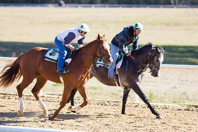 20140215_horses_007