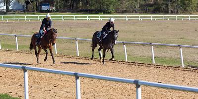 20140215_horses_020