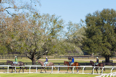 20140215_horses_023