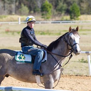 20140215_horses_017