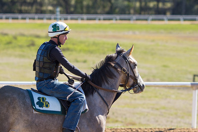 20140215_horses_018