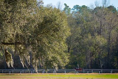 20140215_horses_008