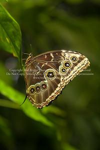 Noche de las Mariposas