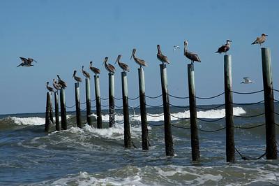 Bird perch, Corolla, North Carolina