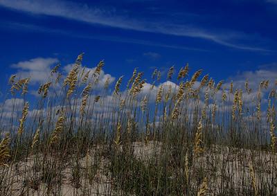 Sea Oats on the Sand Dunes, Kure Beach, North Carolina