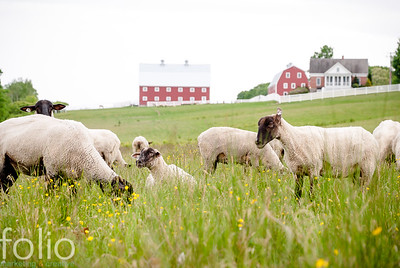 NORTH STAR SHEEP FARM