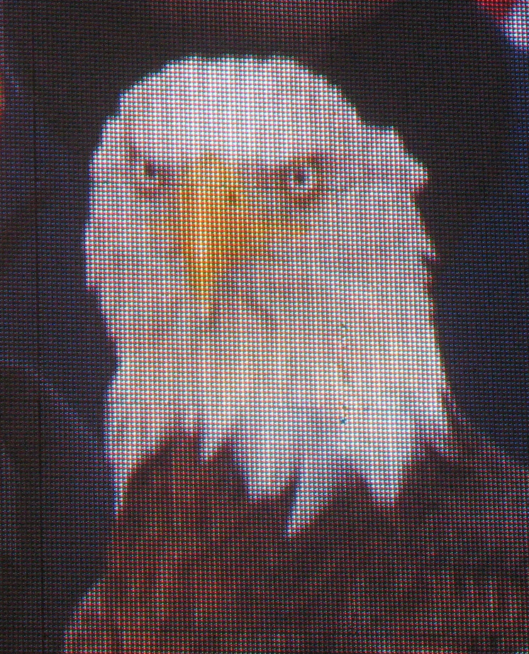 A bald eagle is escorted to the stage.