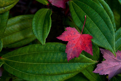 red leave on green