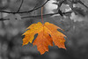 Autumn Color Leaf