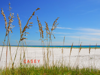 Beautiful sea oats on pretty beach with ocean in distance