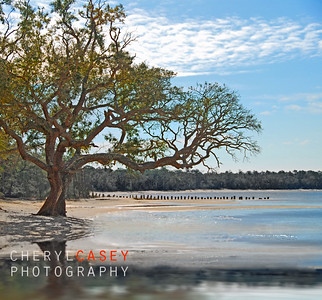 Old live oak tree on shore by pretty water