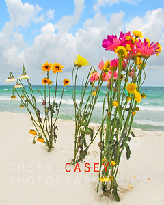 Pretty cut flower bouquets planted in beach sand