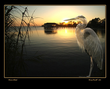 Heron in sunset, Gulf Breeze, Fl Photoshop art