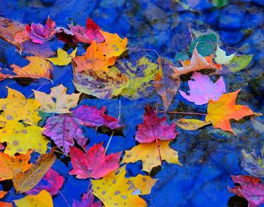 fall colors, Virginia