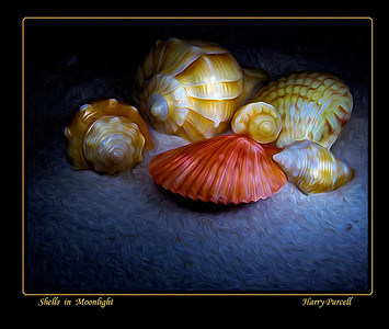 Shells in Moonlight,  light painting with Photoshop pixel bender