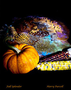 light painting fall scene