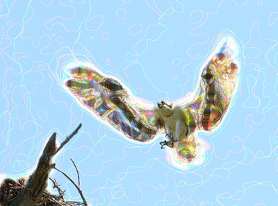 Pixel Bender of a osprey landing