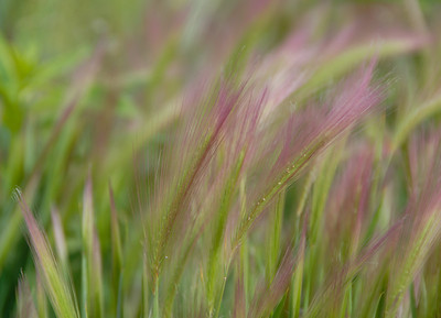 Soft alpine grasses
