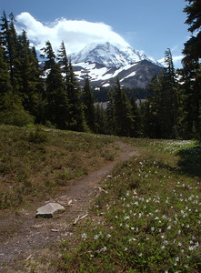 The trail to Spray Park in Washington's Mount Rainier National Park is lined with wild flowers much of the spring and summer. This photo was taken early in July. The cloud forming on top of Mt. Rainier is indicative of changing weather.  Good thing I brought a rain jacket...